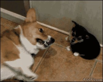Gifs That Show Pets Making The Cutest Mistakes Ever