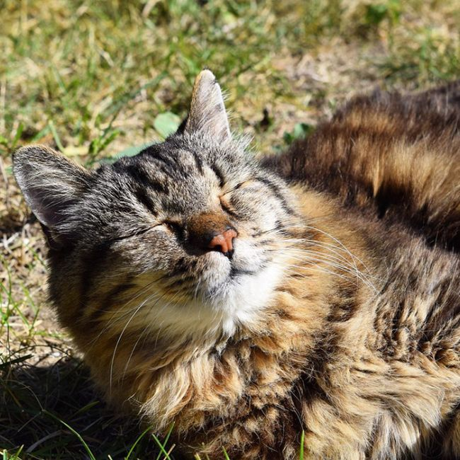 The World's Oldest Cat Was Recently Adopted From A Shelter