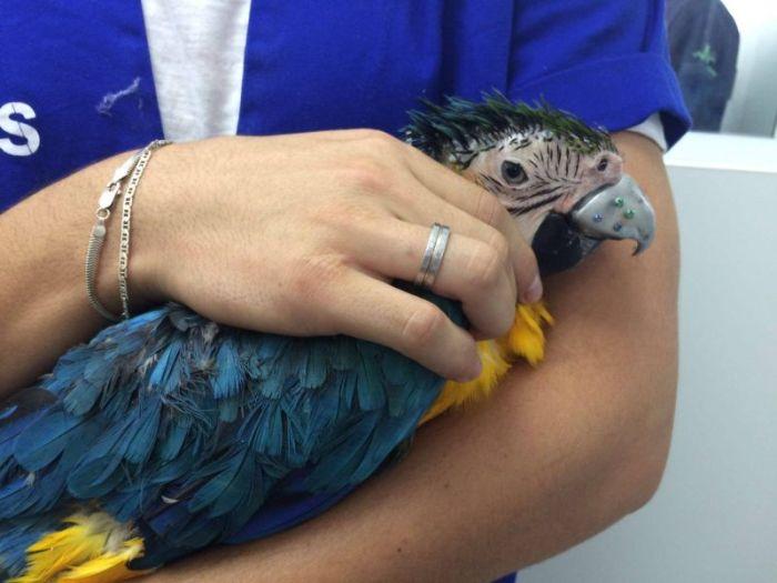 Parrot Gets A New Beak Thanks To A 3D Printer