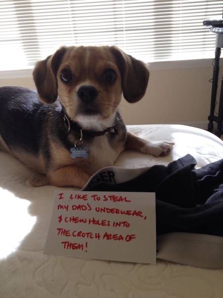 Dog Shaming Never Stops Being Funny