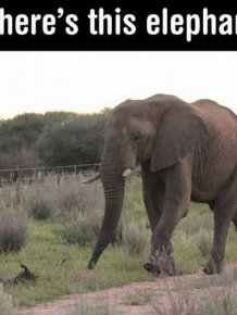 Photos That Prove Elephants Aren't Just Smart, They're Also Polite
