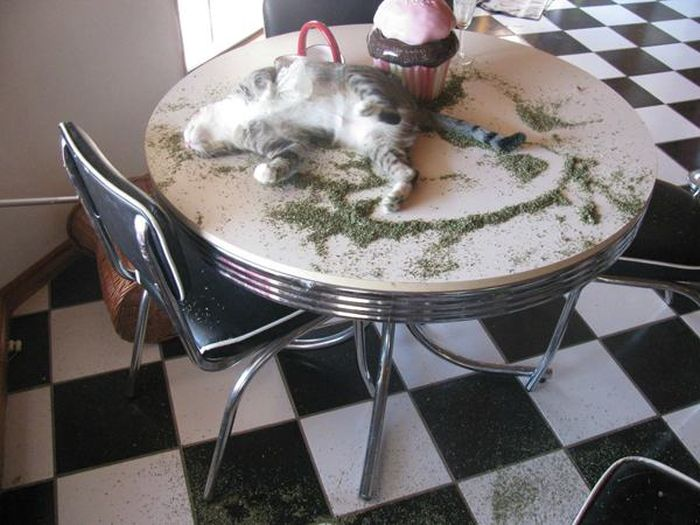 Cats That Got A Taste Of Catnip And Couldn't Get Enough