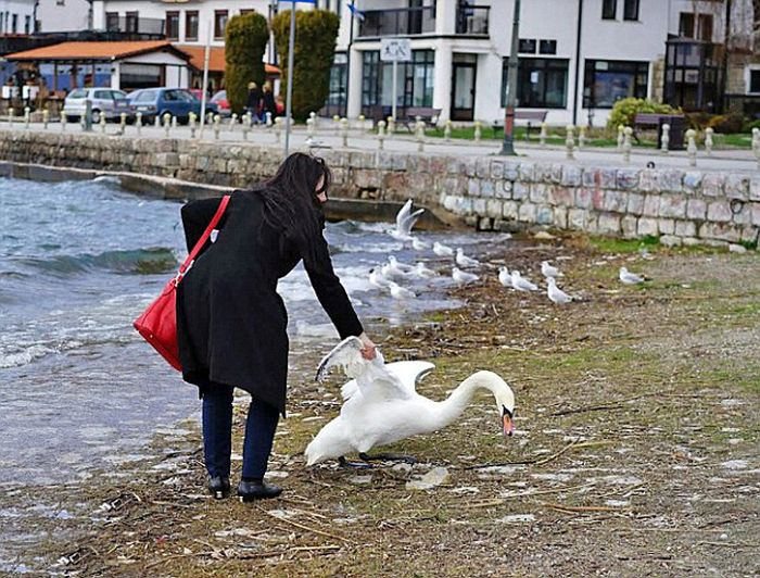 A Swan Died Just So This Woman Could Take A Selfie