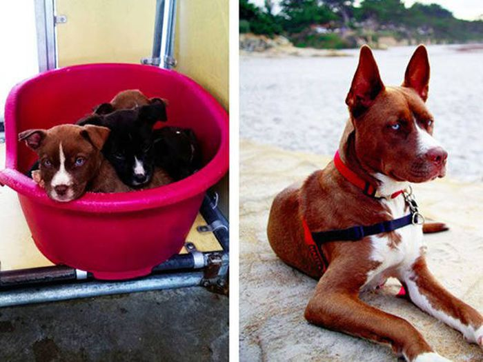 Before And After Photos Of Animals Who Found Their Forever Homes