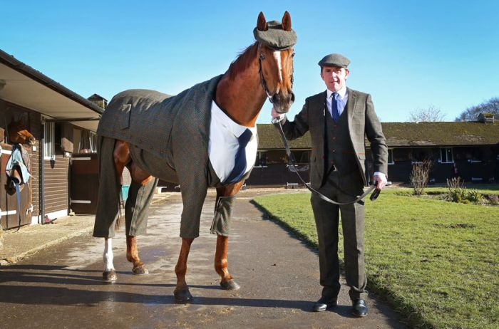 This Horse Looks Absolutely Stunning In A Three Piece Suit