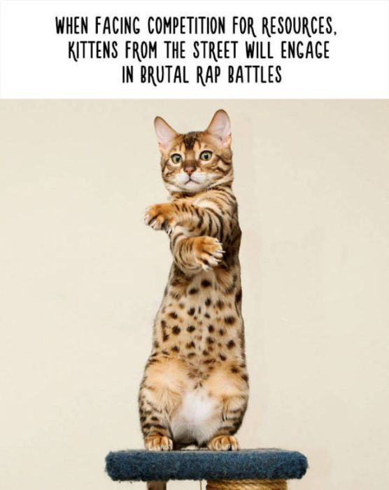 Funny Facts That Will Change The Way You See Animals