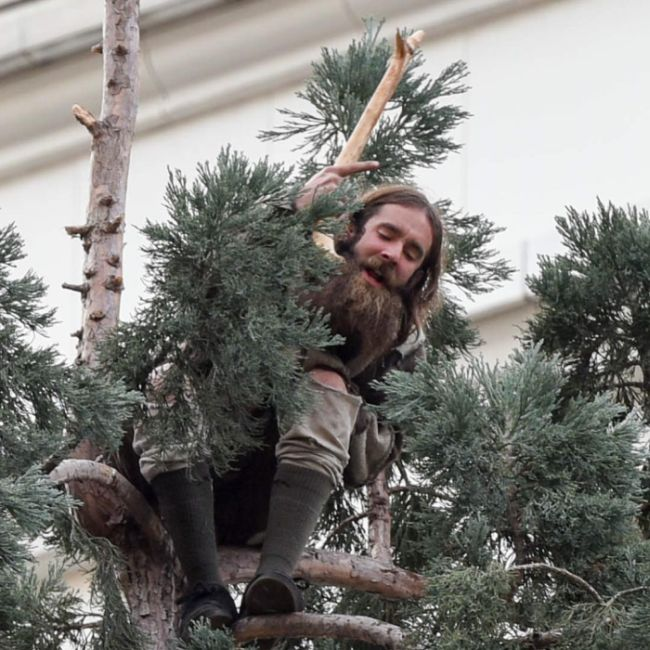 A Man In Seattle Has Climbed An 80-Foot Tree And He Won't Come Down