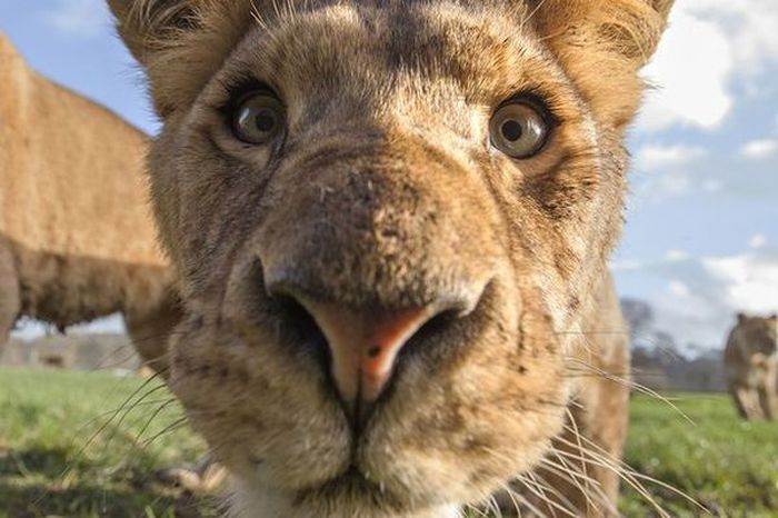 Up Close And Personal With Some Of The World's Most Dangerous Animals