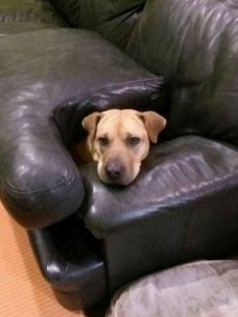 Dog Needs To Find A New Hiding Spot