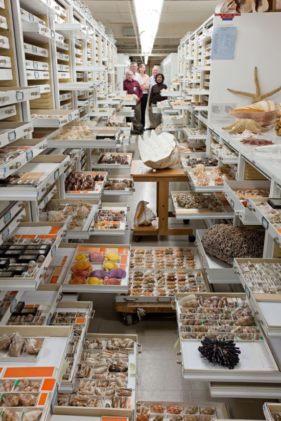 An Inside Look At The Specimen Collections At The Smithsonian's Museum Of Natural History
