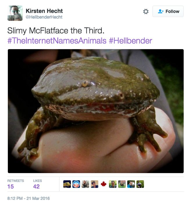 Animals Get New Names Courtesy Of The Internet