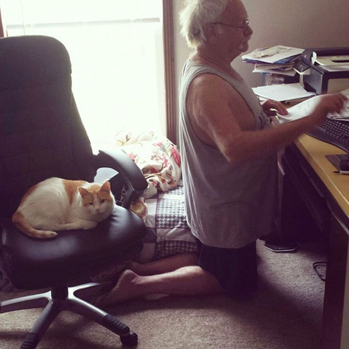 Magical Moments That All Cat Owners Can Relate To