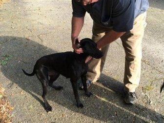 Mississippi Dog Brings Home A Big Bag Of Weed