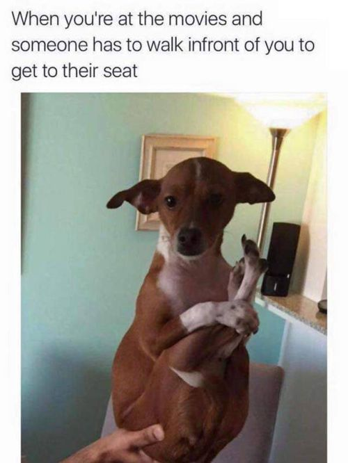 Your Day Is About To Be Made By These Hilarious Memes