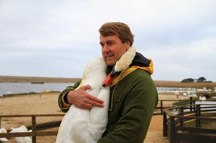 Even Swans Like To Hug When The Time Is Right