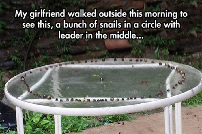 Weird Images And Wacky Situations That Are Impossible To Comprehend