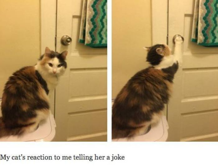 Cat Pictures That Will Never Not Be Funny