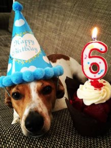 Sometimes Animals Have Cooler Birthday Parties Than Humans
