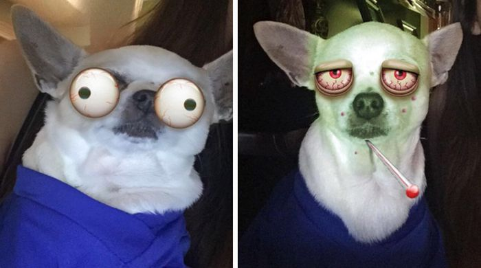 Snapchat Filters Are So Much Funnier When You Use Them On Animals