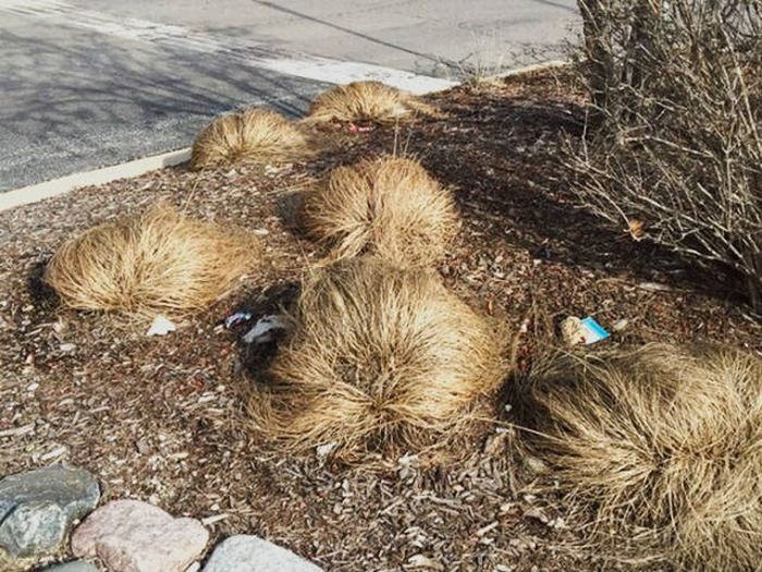 Scientists Have Now Discovered Where Donald Trump Grows His Hair