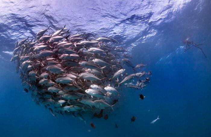 Underwater Photographer Captures An Incredible Marine Tornado