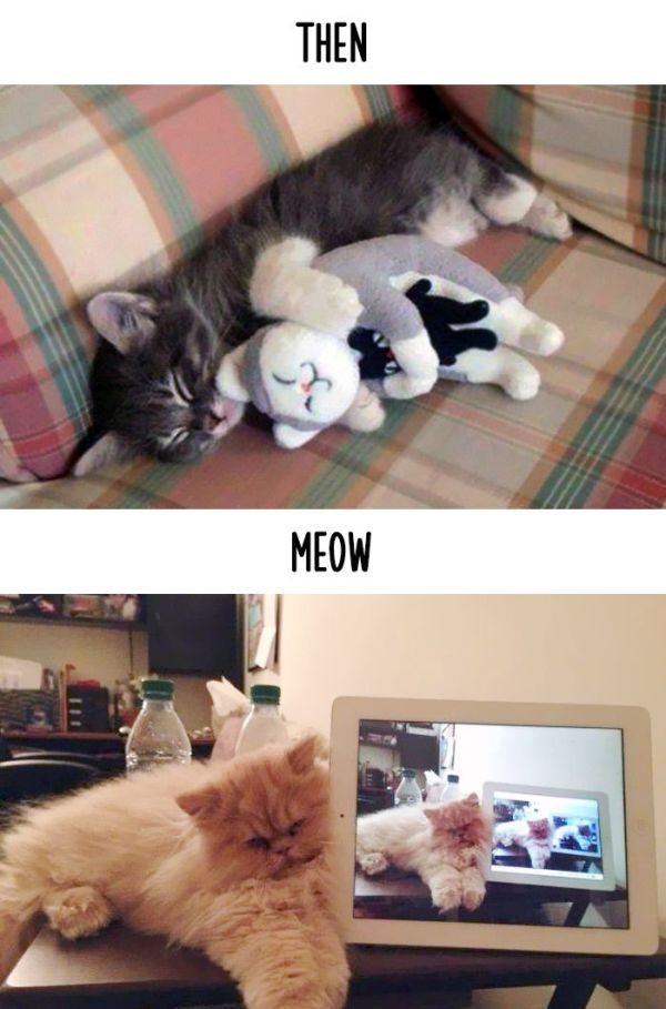 How Technology Has Impacted The Lives Of Cats