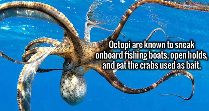 Wild Facts That Are Strange But True