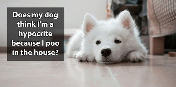 Shower Thoughts That Are Simply Brilliant