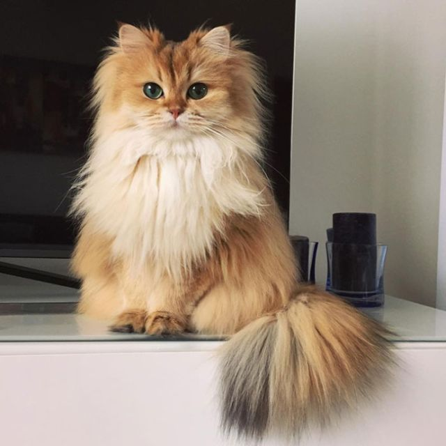 Smoothie Is Instagram's Most Photogenic Cat