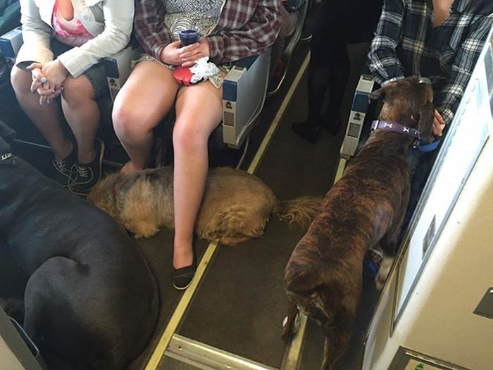 Canadian North Airlines Is Letting People Fly With Their Pets