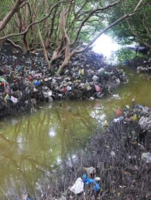 Mangrove Forests Are Dying In The Philippines
