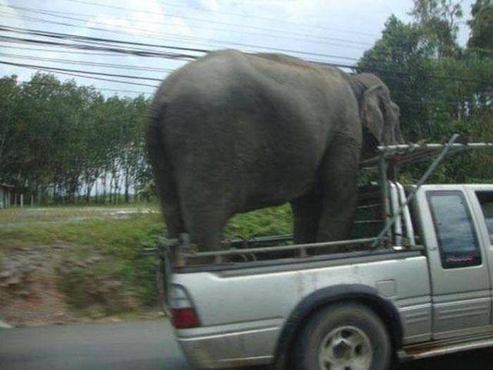 Amusing Auto Humor That Every Driver Can Appreciate