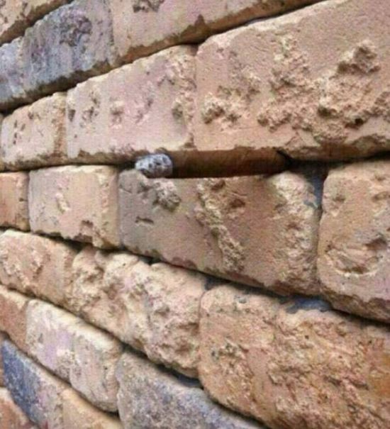 See If You Can Spot The Optical Illusion That's Hiding In Plain Sight