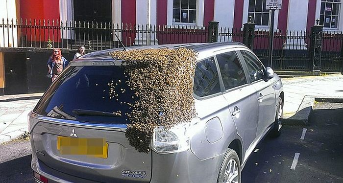 Massive Swarm Of 20,000 Bees Follows Car For Two Days Straight