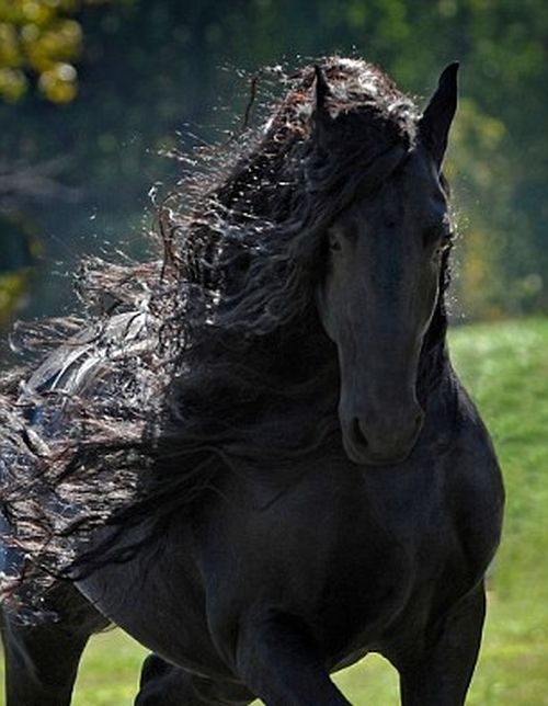 Frederik The Horse Has The World's Most Majestic Mane