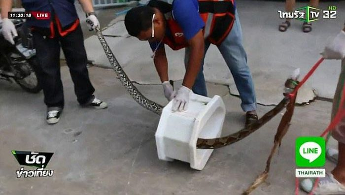 Python Bites Man In The Worst Possible Spot