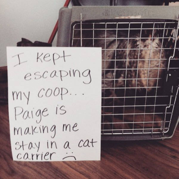 Forget Dog Shaming, Chicken Shaming Is The Next Big Thing
