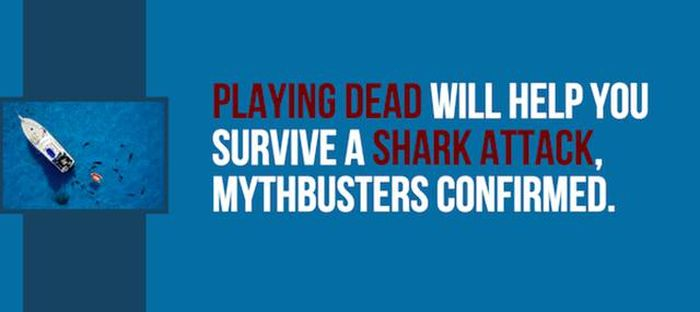 Exciting Shark Facts From The Depths Of The Ocean