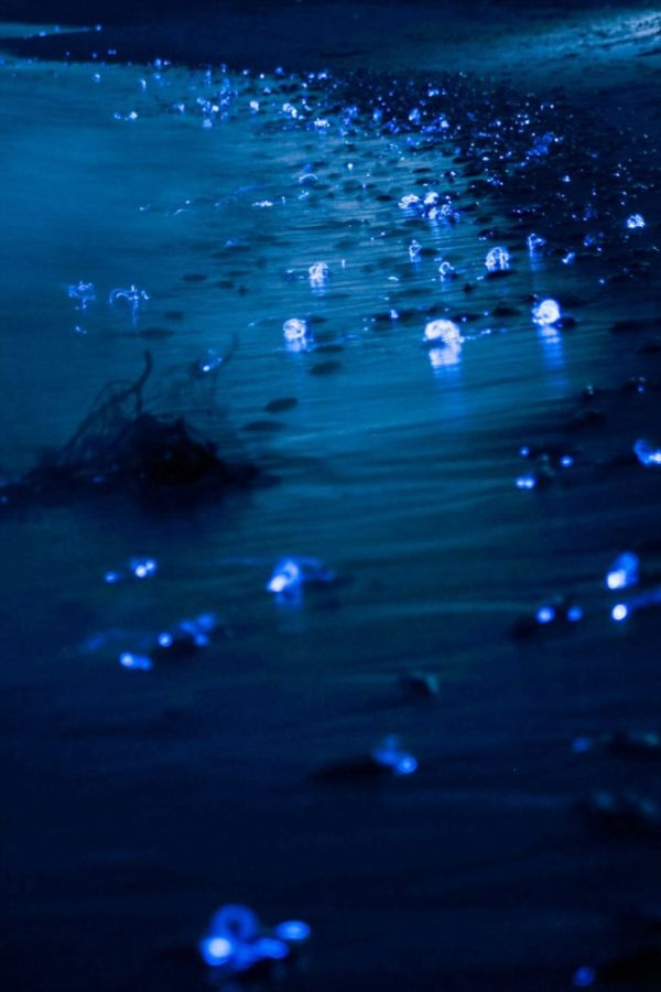 A Photographer Captured Stunning Photos Of The Glowing Sea In Japan