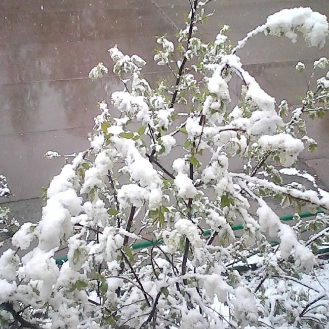 Northern Russia Gets Fresh Snow On The First Day Of Summer