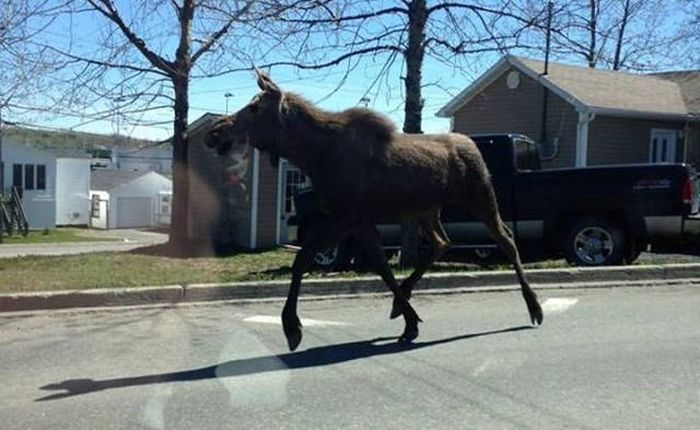 Strange Sights That Can Only Be Seen In Canada