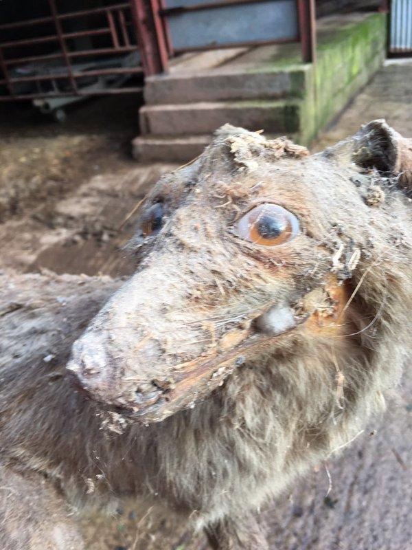 What It Looks Like When Taxidermy Goes Wrong