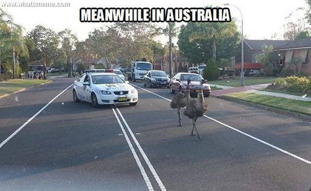 Things Are A Lot More Intense In Australia