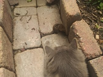Cat Fails At Trying To Catch A Chipmunk