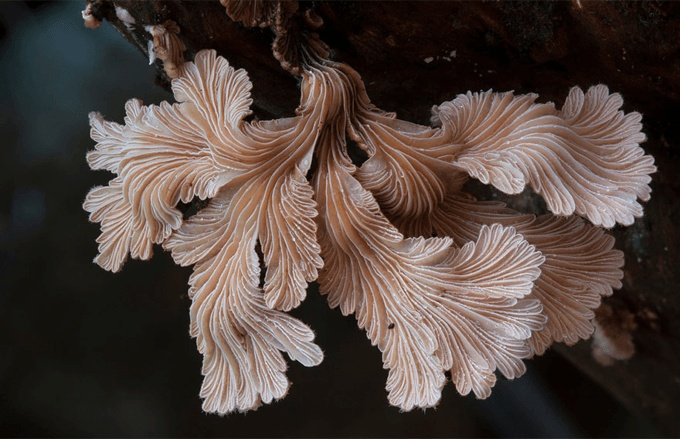 A Closer Look At The Magical World Of Mushrooms