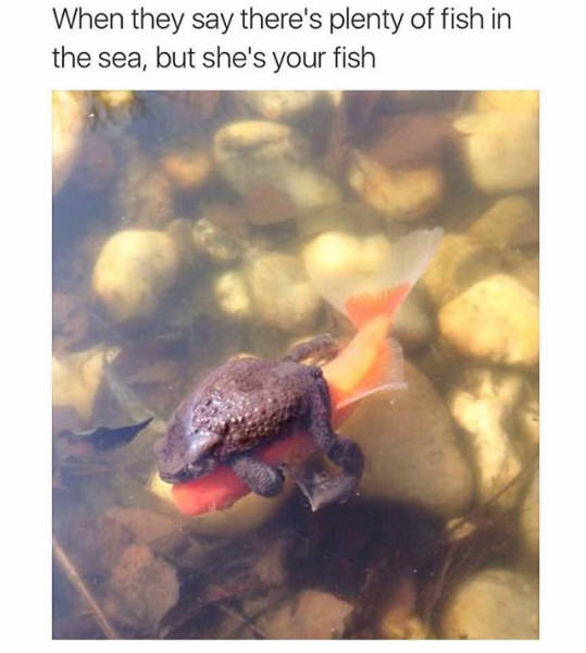 Funny Memes, part 2