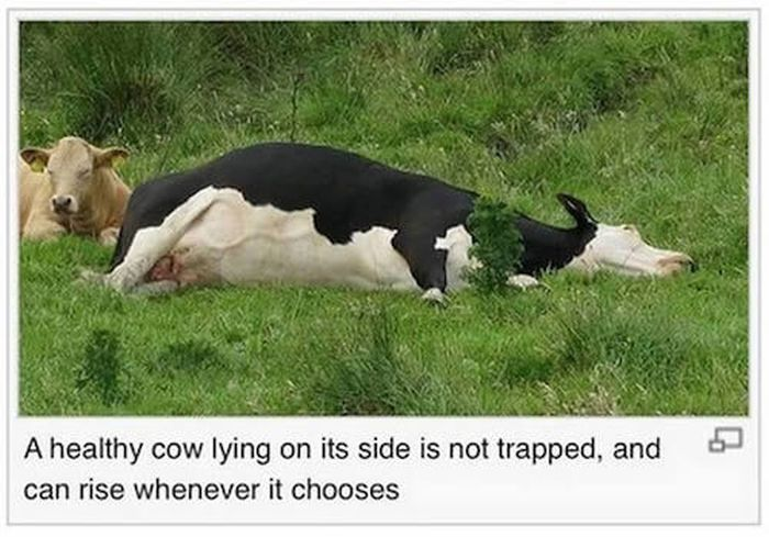 Hilarious Photo Captions From The Depths Of Wikipedia