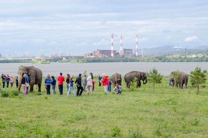 Russian Residents Greeted By A Pack Of Elephants