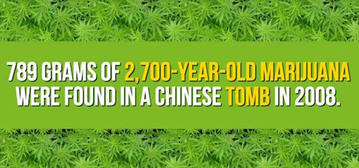 Mind Blowing Facts You Need To Know About Marijuana