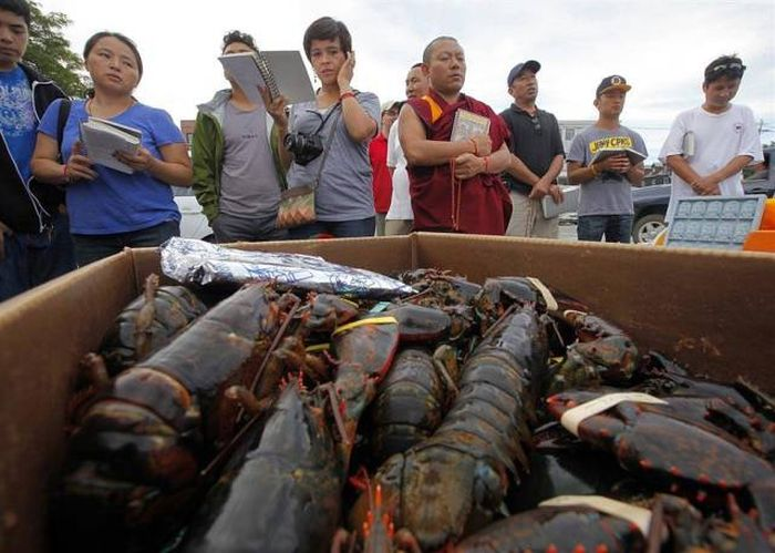 Buddhist Monks Purchase Lobsters Only To Set Them Free